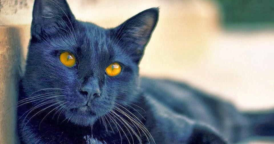 17 ноября – День защиты черных кошек в Италии ::Итальянский ...