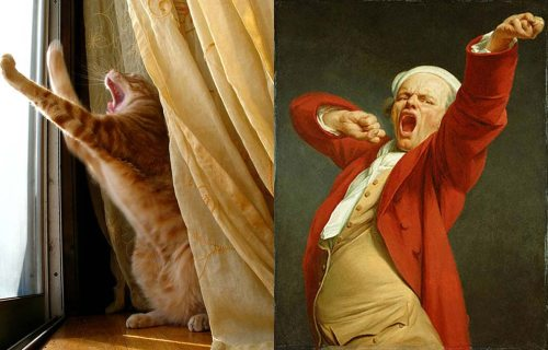 kucing comel cuba tiru manusia