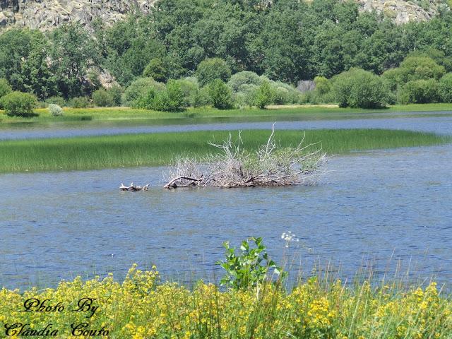 Fotografia tirada na Lagoa de Sanabria, a maior lagoa artificial da Europa. As águas límpidas desta lagoa cativam todos os olhares, fiz uns quilómetros até contornar toda a lagoa mas no terminar dela deparei me com esta conjunção de cores e uma composição fotográfica tão sublime.