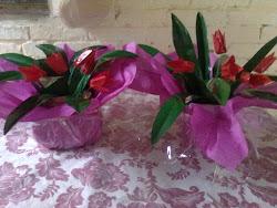 tulipas de pet