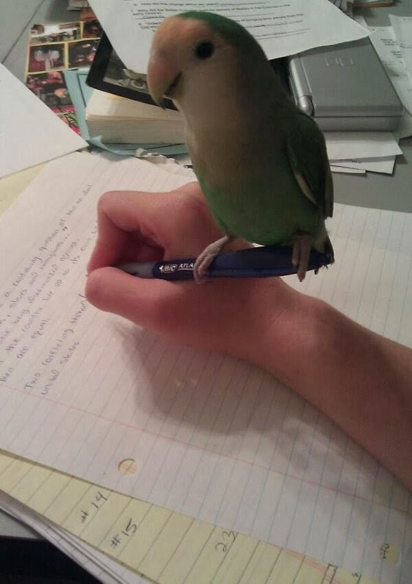 Funny animals of the week - 22 November 2013 (35 pics), bird stands on pen