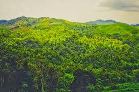 jenis-jenis hutan lengkap dengan gambar dan keterangan