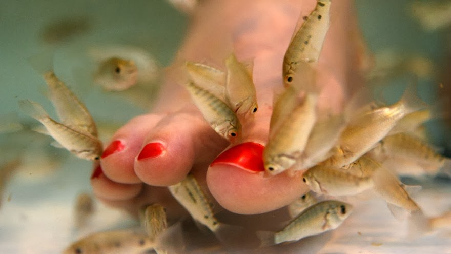 T r a c e w o r k pedicures interesting things for Fish pedicure nyc