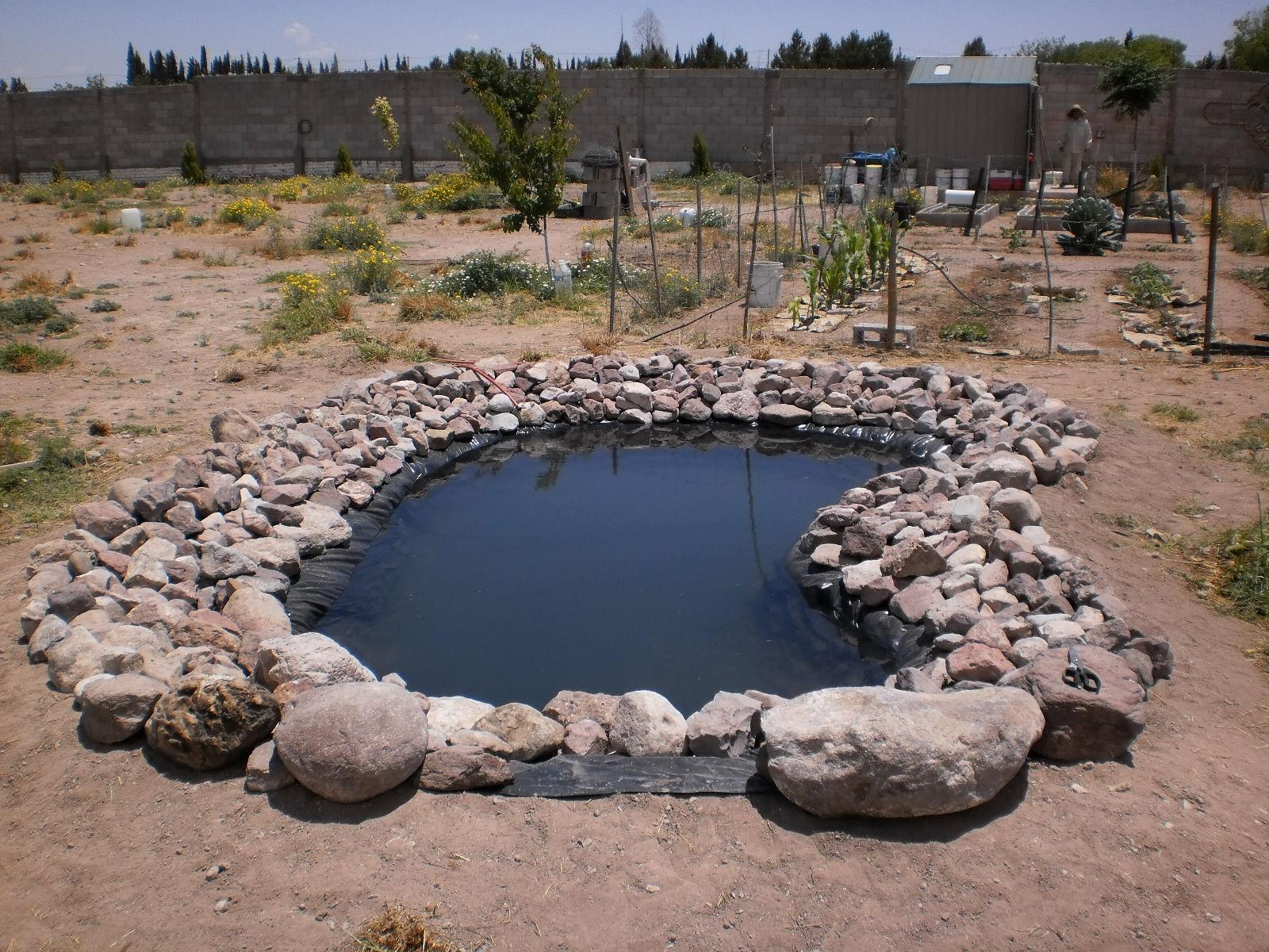 Las golondrinas margaritas camalu el estanque de los for Pileta con peces