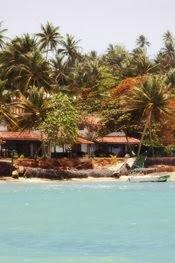 Sri Lanka: Pod palmą w Unawatunie, przy stoliku na plaży w Mirissie