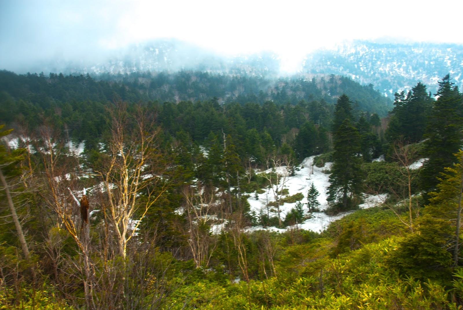 雪の残る山道をひたすらに進む