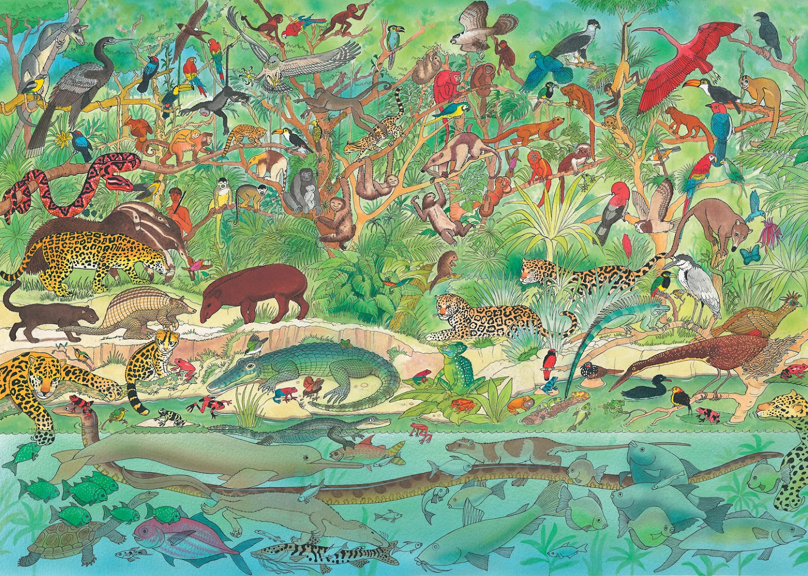 Rainforest one of a series of 6 watercolour illustrations featuring