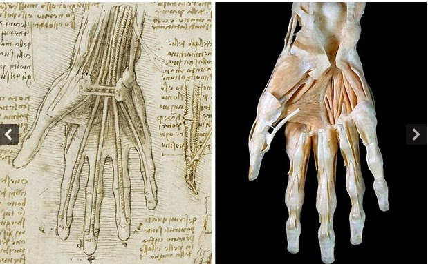 Leonardo Da vinci drawings on human body
