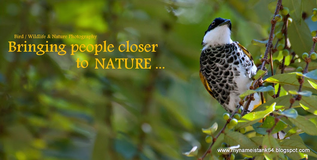 Birds of Malaysia @ mynameistank64