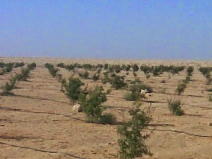اراضى زراعية للبيع بالعاشر من رمضان