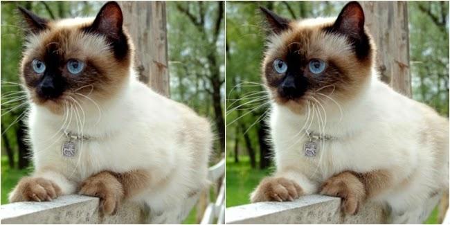 Ajaib, 7 Kucing Ini Memiliki Karier Lebih Sukses Dari Manusia