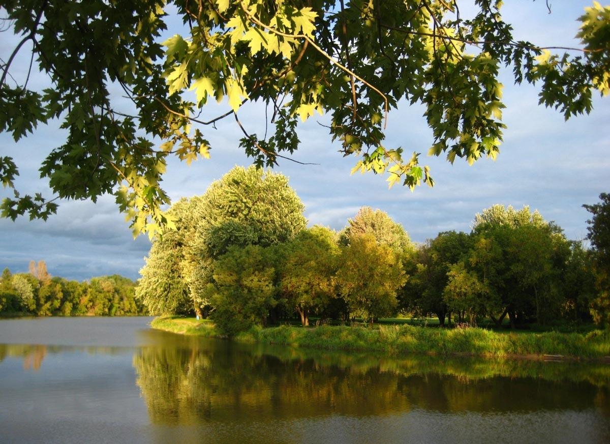 Arte y jardiner a arboles y arbustos para zonas sombr as for Arboles de jardin fotos