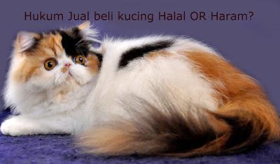 hukum-jual-beli-kucing