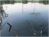 река Аксай, фото Аксая