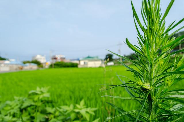 Korea country Pohang.