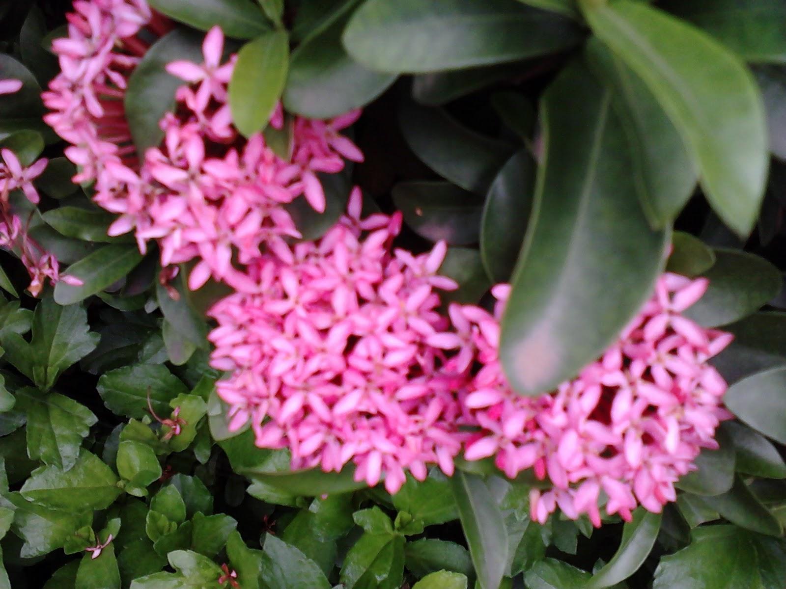 Garden Care Simplified Start a Shade Garden of Your Dreams