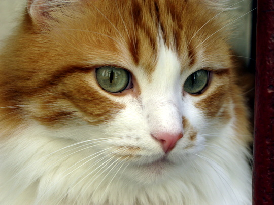 Cat from Gruissan, France