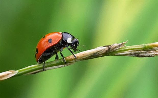 Most Effective Ways Of Controlling Garden Pests