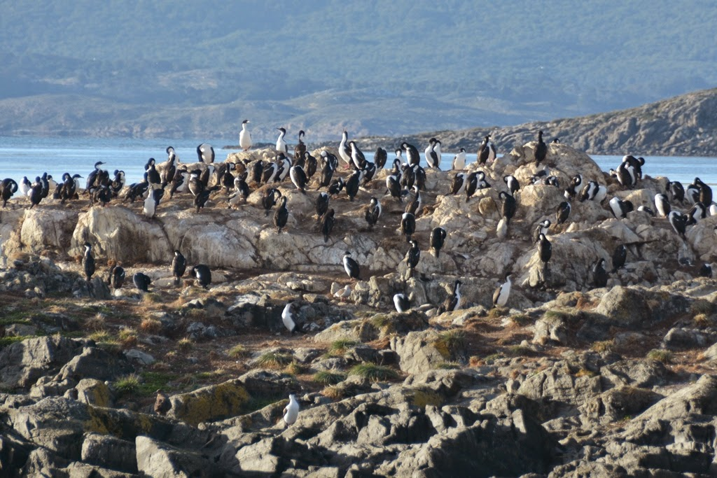 Ushuaia Beagle Canal cormorants