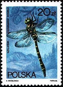Sello polaco de una Cordulegaster annulatus
