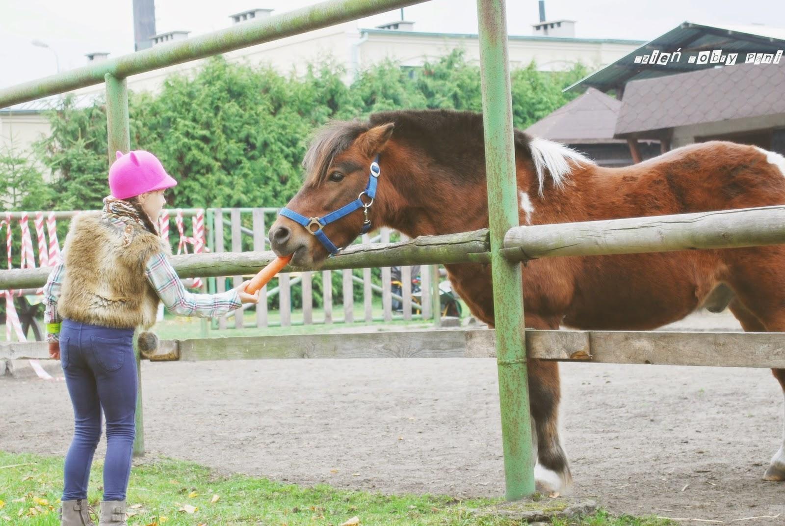 moda na konia