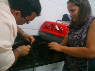 Tio Neto aplicando vacina na gata Dodó, da Renata Góes