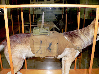 Anti Tank Dogs of ww2 - Weird Weapons