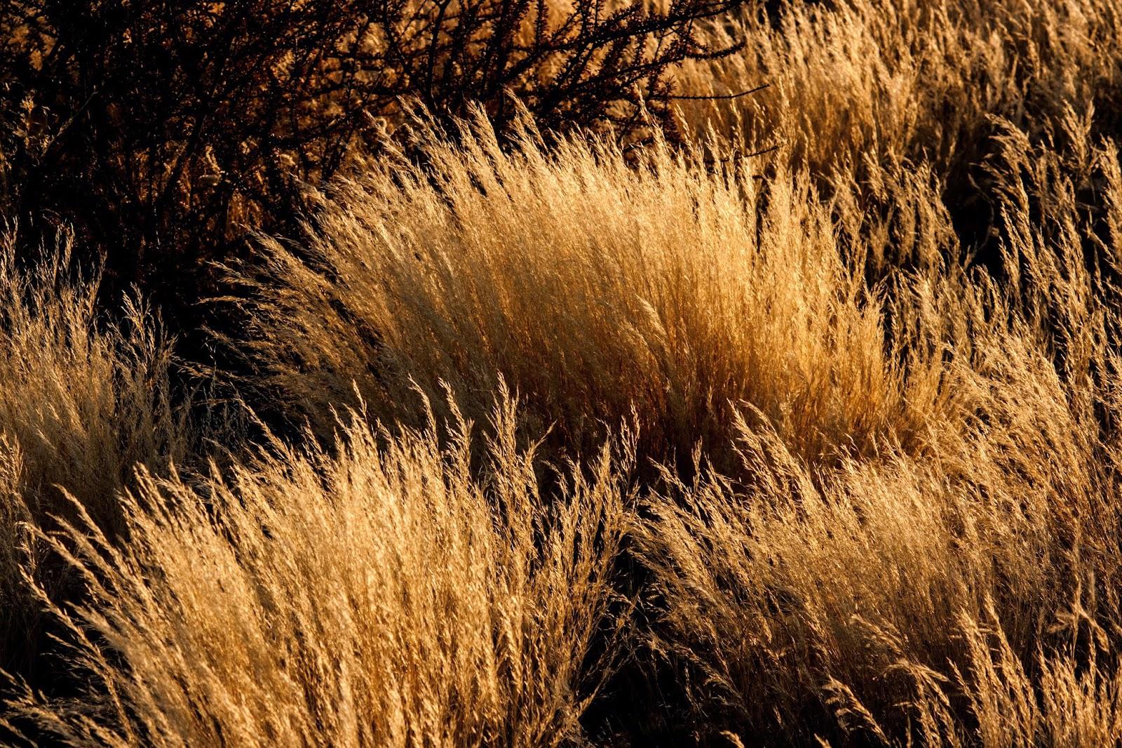 bush weed etosha namibia safari