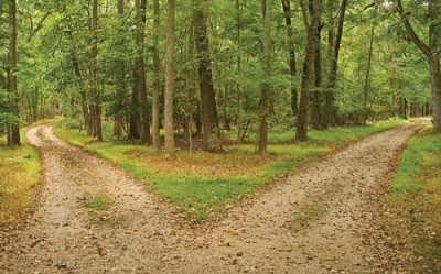 Two paths split in a woods