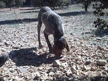 sostenibilidad - la trufa en Sarrión - vídeo