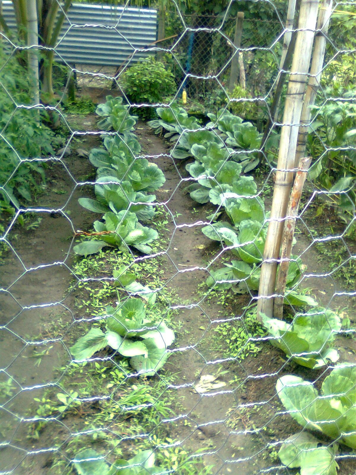 con el programa de semillas y huertos caseros respetando los principios de sercoba educar y organizar el promotor educa con charlas sobre