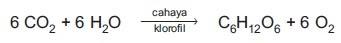 Reaksi kimia proses fotosintesis