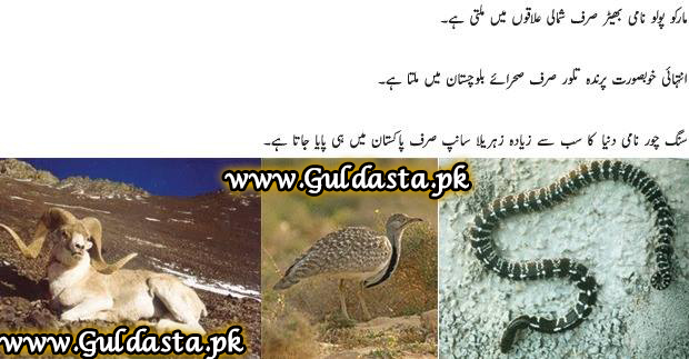 Historical places of pakistan essay in urdu