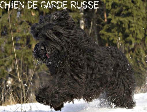 chien de garde russe