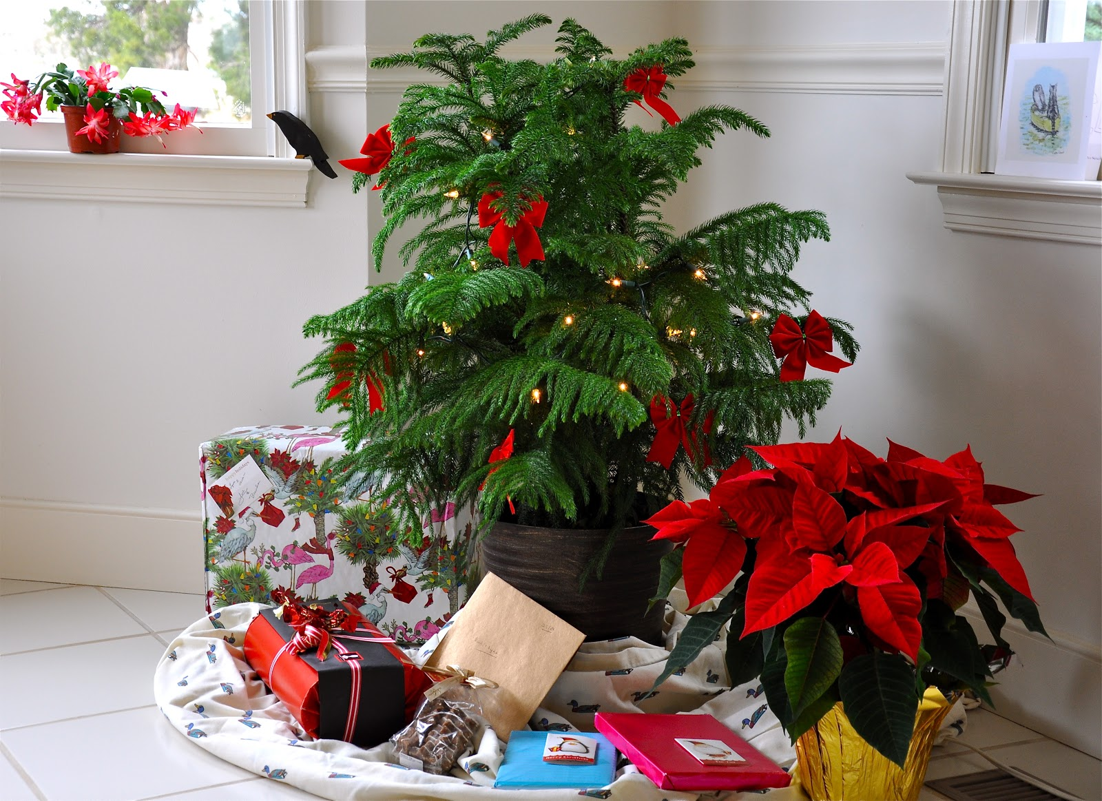 No room for a traditional Christmas tree? Try a Norfolk Island pine ...