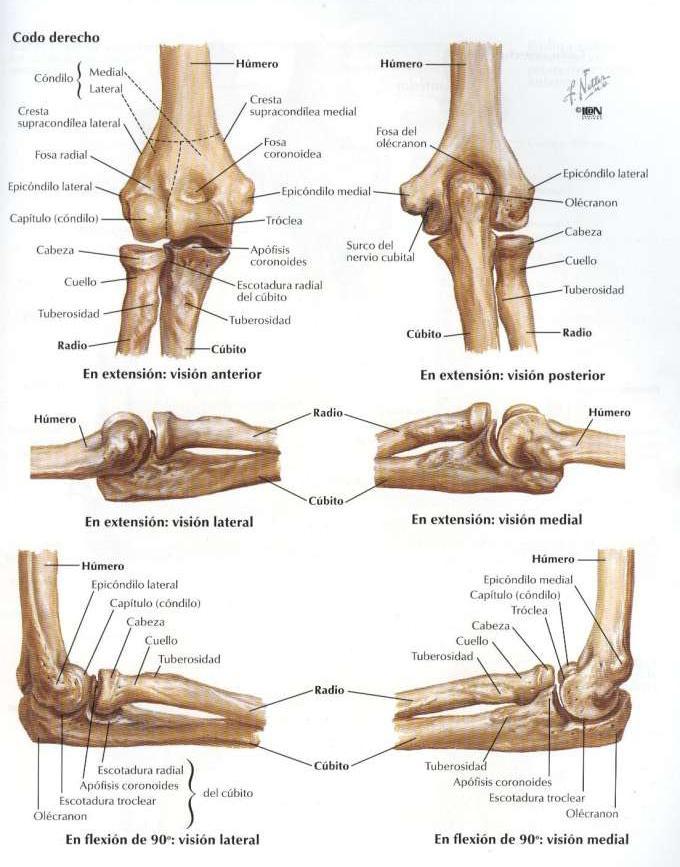TUmed.blogspot.com: Plantillas Traumatologia