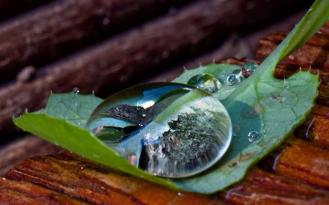 Gotas de Agua - Waterdrops