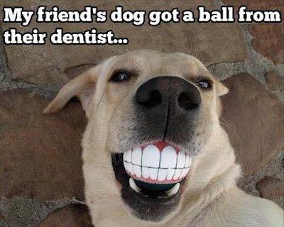 Funny dog ball of human teeth smile. My friend's dog got a ball from their dentist.