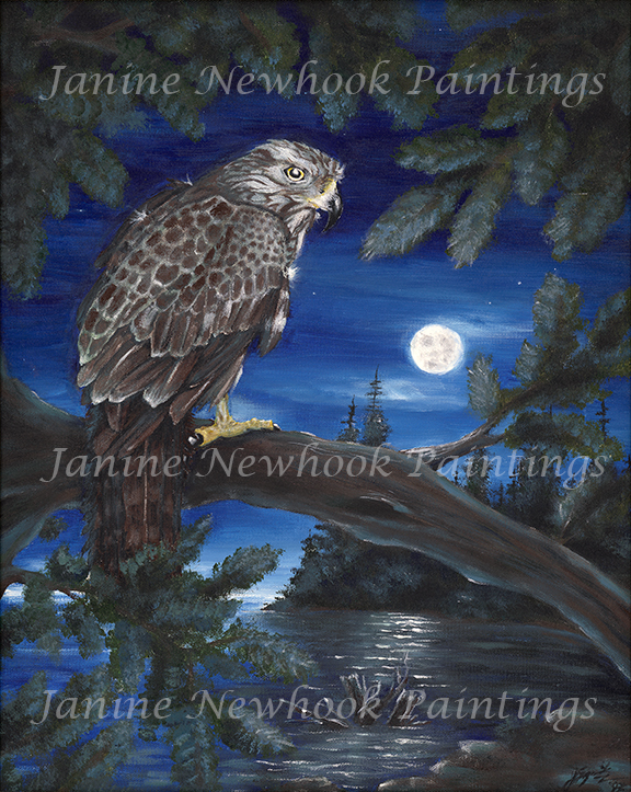 Eternal Light Red Tailed Hawk Totem And Omens