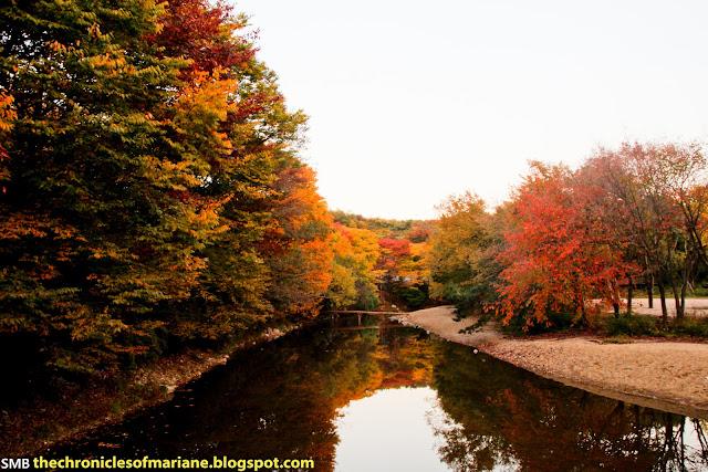 Korean autumn tree