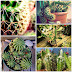 Cactos e mini cactos: Como plantar, cuidar e decorar