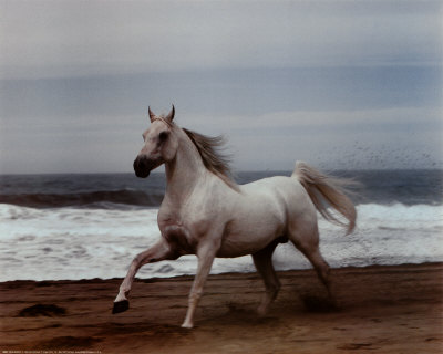 ron kimball white horse on beach