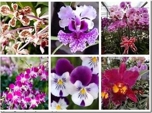 kumpulan foto bunga anggrek terindah di dunia terbaru 2018