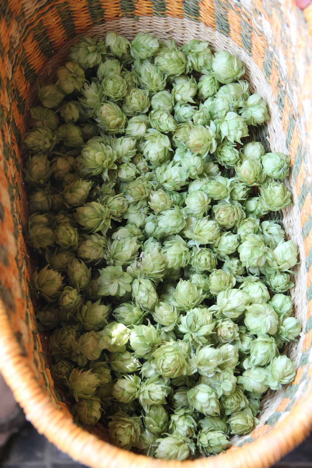 HOPS For MedicineI