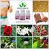 Obat pelangsing herbal