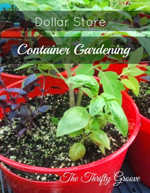 Dollar Store Container Gardening