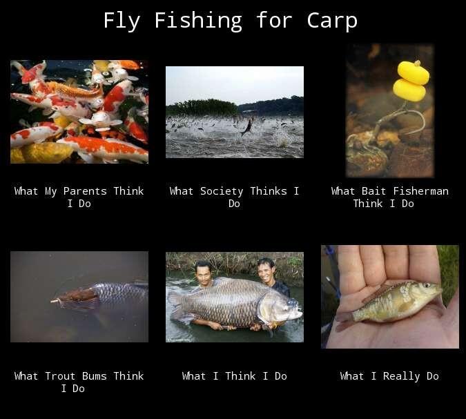 fly carp meme