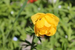 Puutarhapalvelua oli sitten kukista tai puutarhapuista kyse