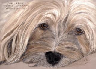 Tierportrait Tibet Terrier, Hundeportrait nach Fotovorlage mit Pastellkreiden malen oder zeichnen lassen.