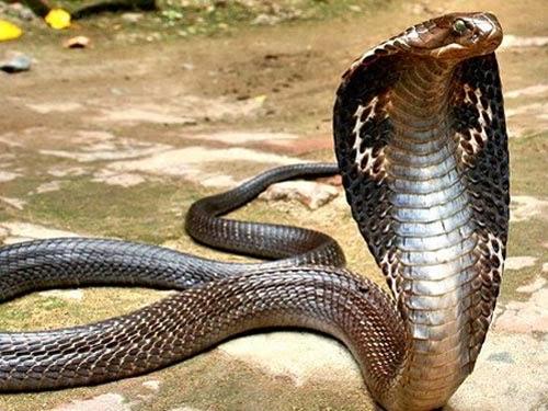 Phim về rắn
